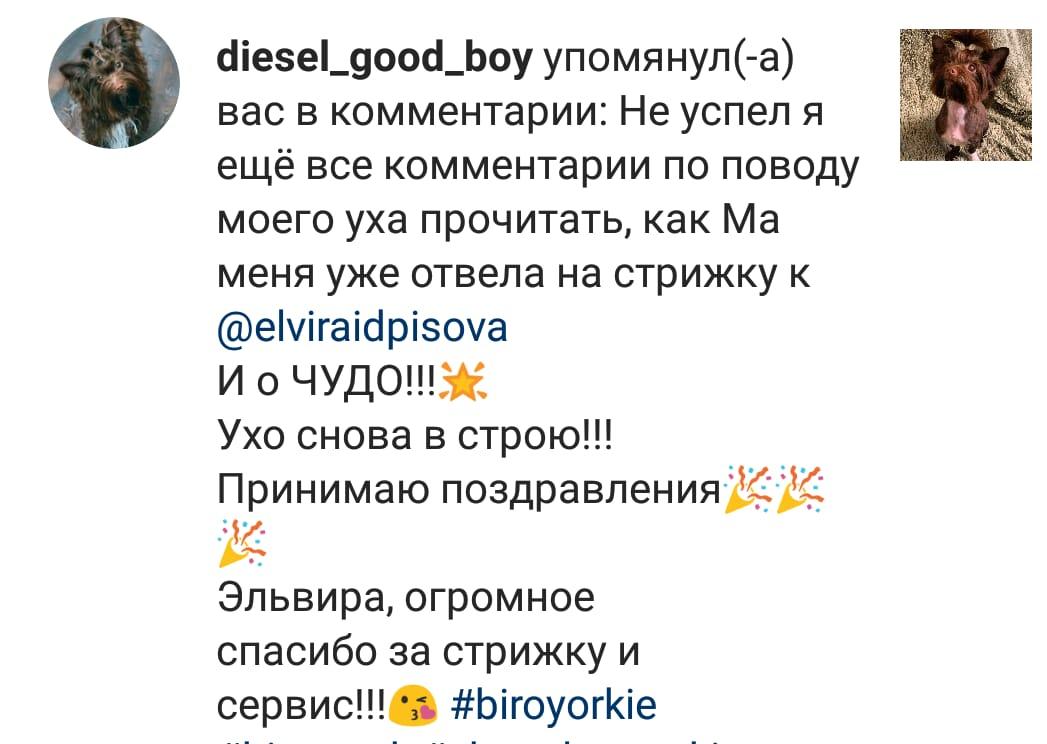whatsapp image 2019 08 06 at 14.35.21 - Груминг салон в Москве - район Перово