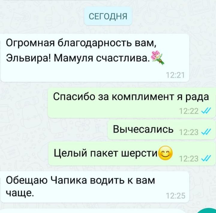whatsapp image 2019 08 06 at 14.35.22 e1566218191183 - Груминг салон в Москве - район Перово
